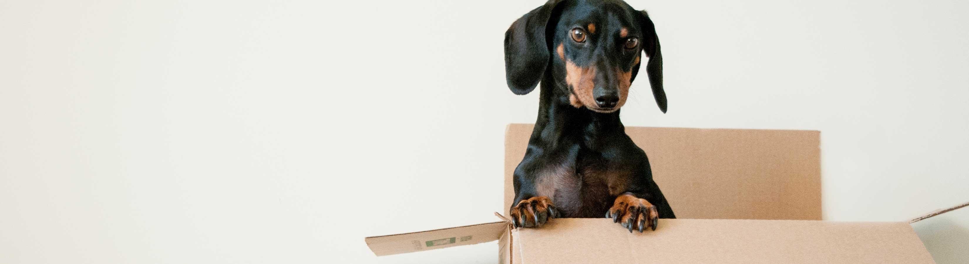 Huisdieren-Verhuizen-Tips